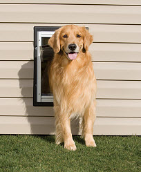 doggie door installer