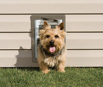 dog door installation